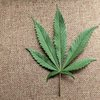 01072015_marijuana_leaf_Reuters