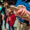 Carroll - Crocs Exhibit Academy of Natural Sciences