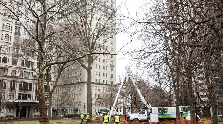 Carroll - Rittenhouse Tree Removal