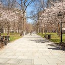 01_040517_WashingtonSquare_Carroll.jpg