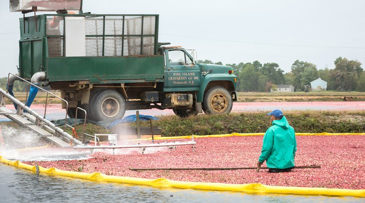 Carroll - NJ Cranberry Harvest