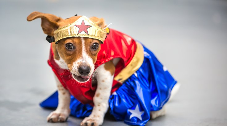 Carroll - Dogs in Halloween Costumes