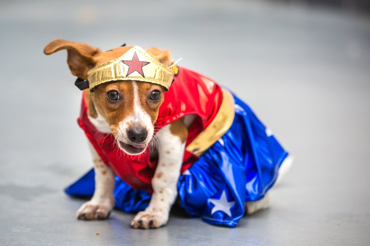 Heart-melting, adoptable dogs in Halloween costumes | PhillyVoice