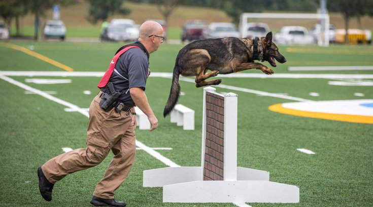 02-09276_K9Comp_Carroll.jpg