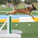 03-09276_K9Comp_Carroll.jpg