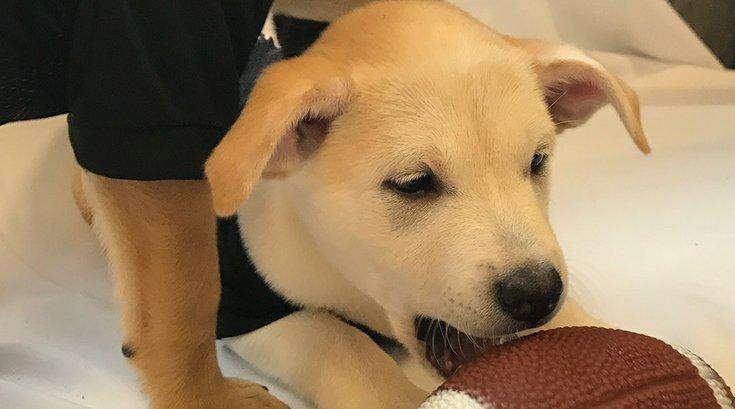 Uber Puppies: Draft Edition