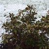 04092016_snowy_April_lawn
