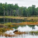 05-100416_Pinelands_Carroll.jpg