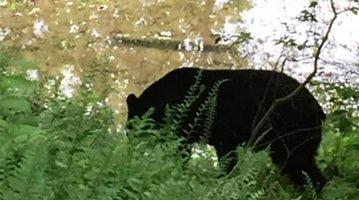 05132016_bear_fairmountpark_FOTW