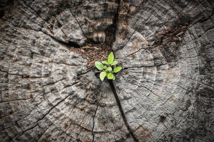 05222017_small_tree_iStock
