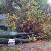 05232018_Sandy_Wyncote_damage_wiki