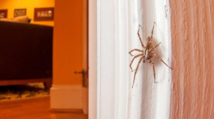 06032018_spider_CC