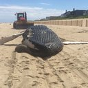 061816_whale_delaware