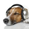 06302017_Dog_with_headphones_iStock