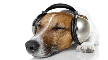 06302017_Dog_with_headphones_iStock