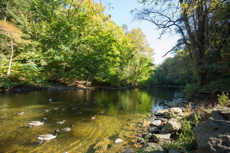 Stock_Carroll - Wissahickon Valley Park, Wissahickon Creek