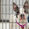 Carroll - ACCT Animal Shelter