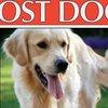 07242017_lost_dog