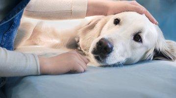 Oxycodone pets