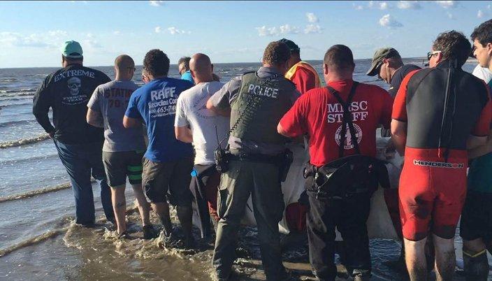 08092016_dolphin_rescue3_MMSC