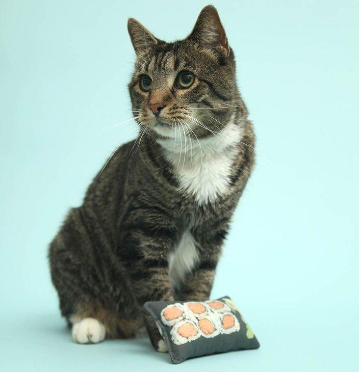 08142015_cat_toy_sushi