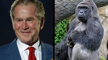 08152016_Bush_Harambe_AP_CZ