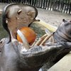 09012017_Cologne_Zoo_AP