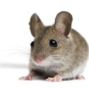 09222015_mouse_iStock