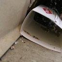 09052017_DresherHill_mousetrap