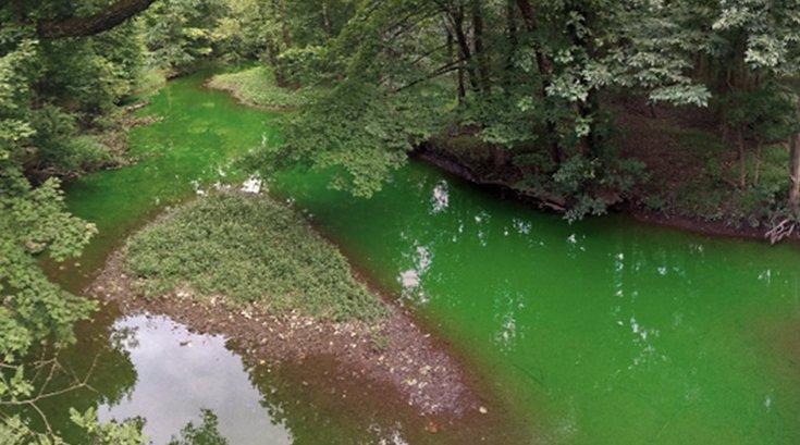 09112017_Wissahickon_creek_green