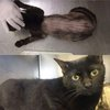 091916_cats_rescue