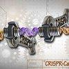 09192015_CRISPR_Cas9_embryo