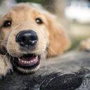 09262016_dog_istock