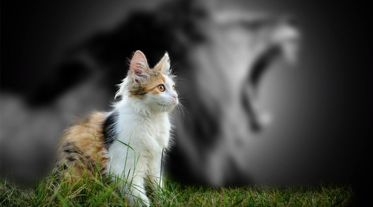 09272017_Cat_Lion_Shadow_iStock