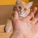 10112016_cat_scratch_iStock