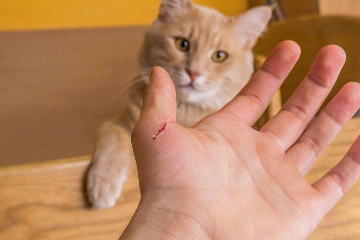 Почему домашний кот нападает и кусает хозяина