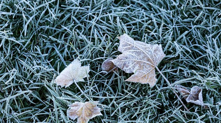 10242016_frost_on_the_grass_iStock