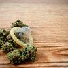 10272017_marijuana_condom_iStock
