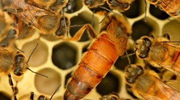 Philadelphia Beekeepers Guild Honey Festival Photo