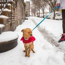 10_031417_Snow_Carroll.jpg