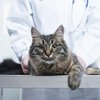 111516_cat_laws.jpg