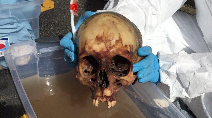 12182017_Holmes_skull2