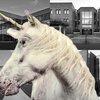 12212016_College_unicorns_Ill