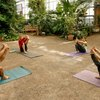 Yoga at Fairmount's Horticulture Center this winter