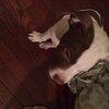 042216_NJ_Dog