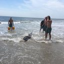 Dolphin Sea Isle