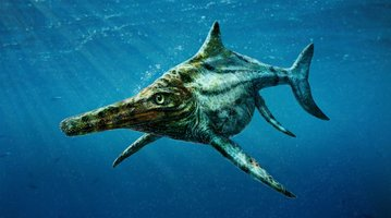 The newly identified prehistoric marine reptile Dearcmhara shawcrossi