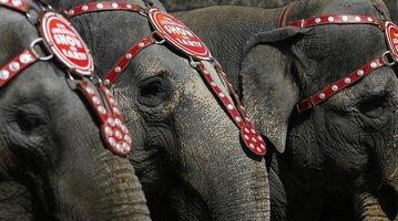 03052015_Elephants