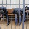 03112015_Nemtsov