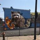 Raccoon mural